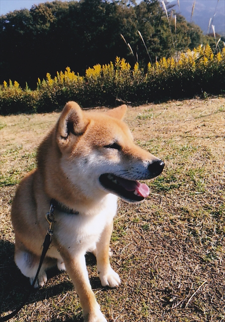 卒業犬2_R