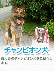 champion_banner