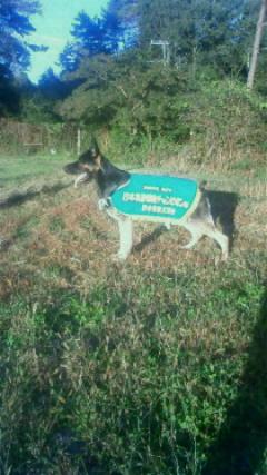 2016082108400012016年入賞犬エドs
