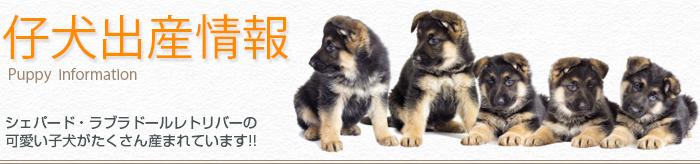 puppy_info_banner